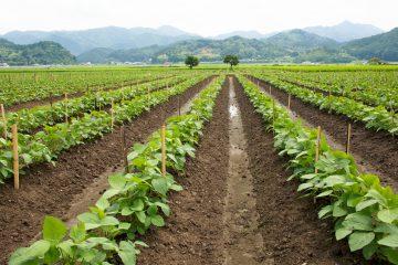 農業・特産物